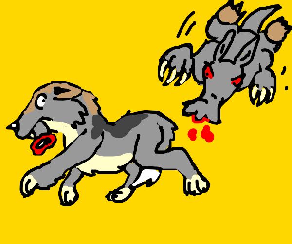 wolf ripping off an ardvarks nose