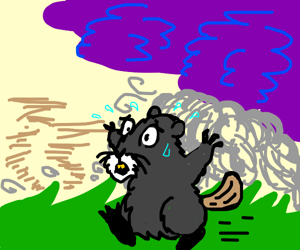 Beaver in a Monsoon
