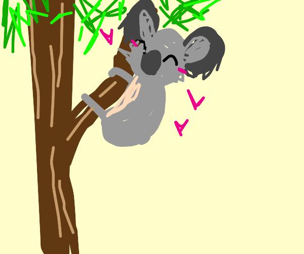 cute koala climbs a tree