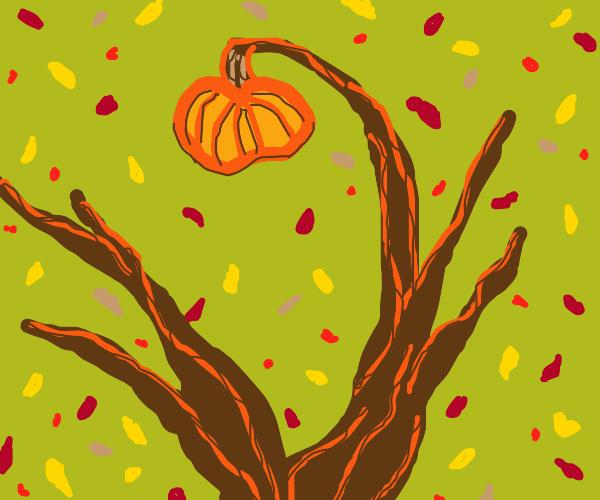 pumpkin growing in a tree. it's fall