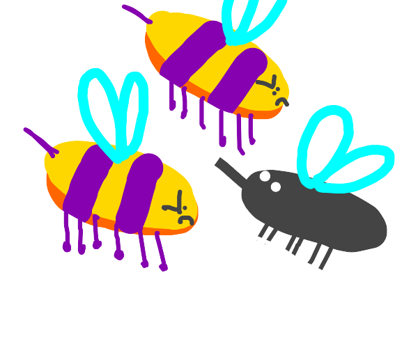 Bees are angry at fly