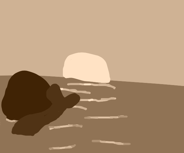 a whale looking at a sunset
