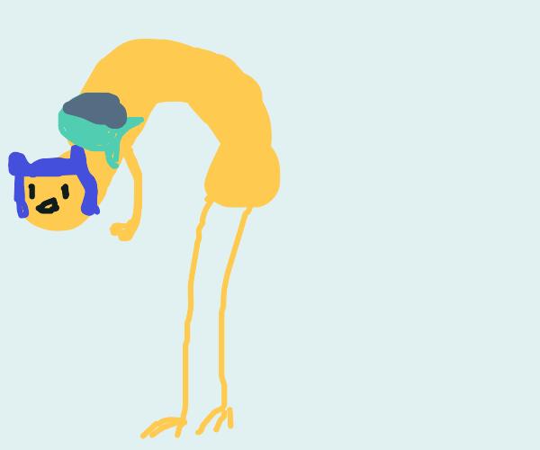Tall chicken (chicken + Finn the Dog)