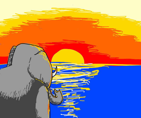 Elephant watching the sunset
