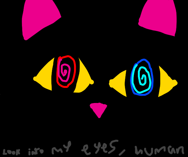 black cat hypnotizing you