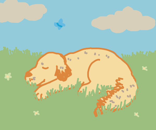 Sweet old dog takes a nap