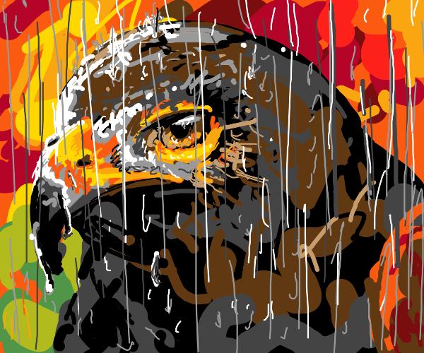 A falcon in the rain