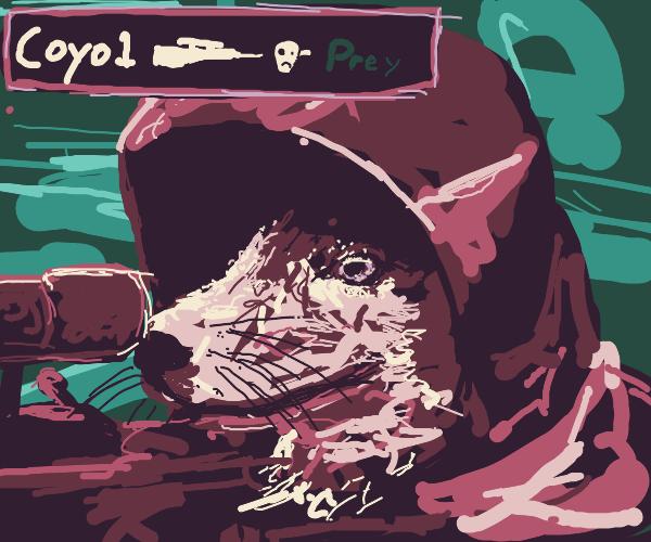 Coyote headshot