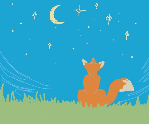 fox looks at the stars