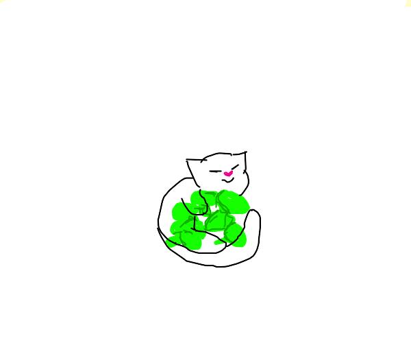 Cat sleeping on pile of broccoli