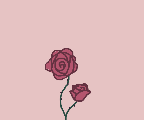 a single rose, top POV, with a single leaf