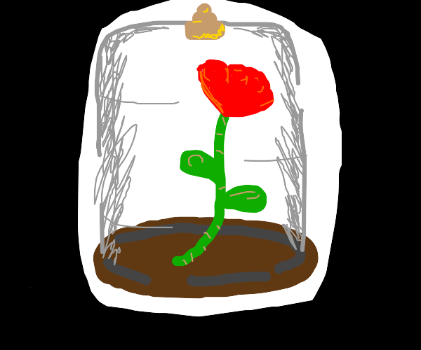 rose in glass container