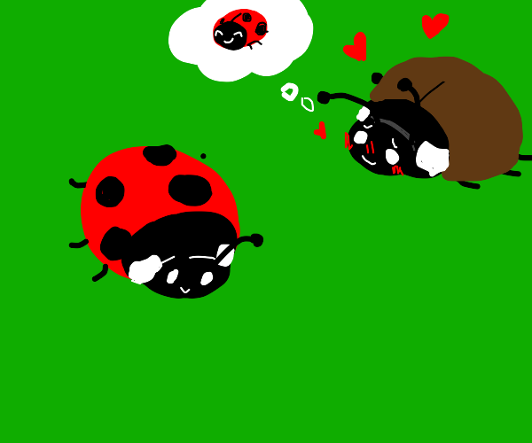 brown ladybug in love with spotted ladybug