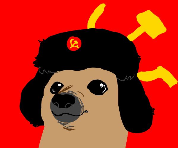 Communist dog meme