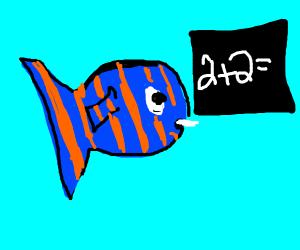 Fish doing math