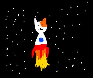 cat rocket in space
