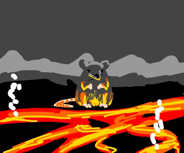 Rat looks at lava