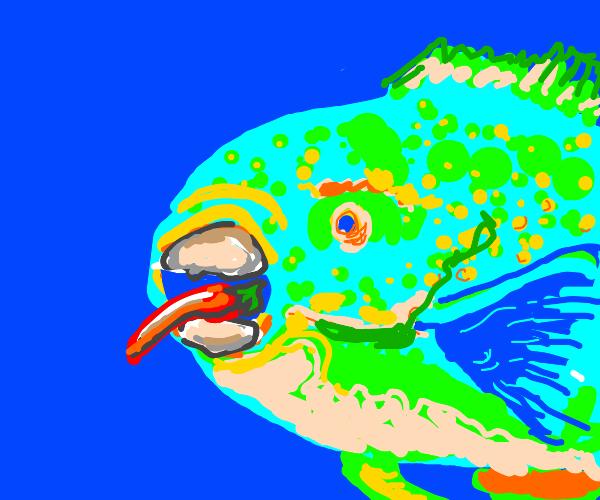 Parrotfish eating Pepper