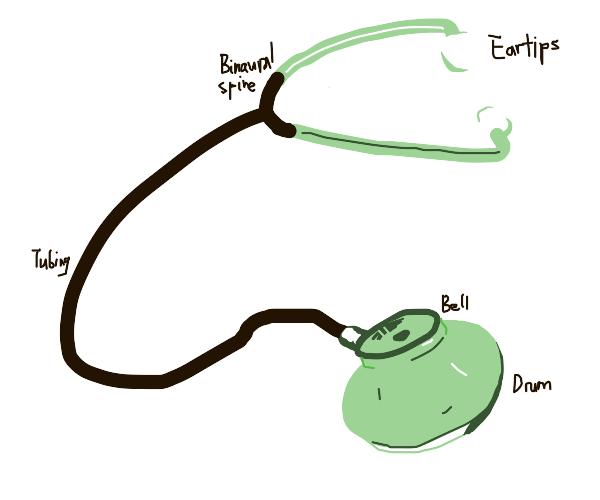 Anatomy Of Stethoscope