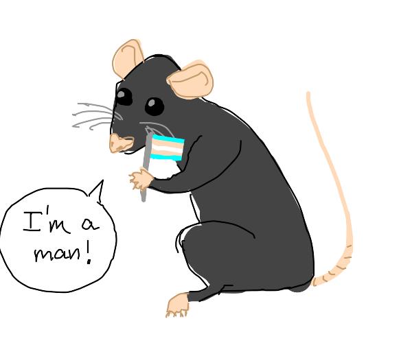 rat identify as a man