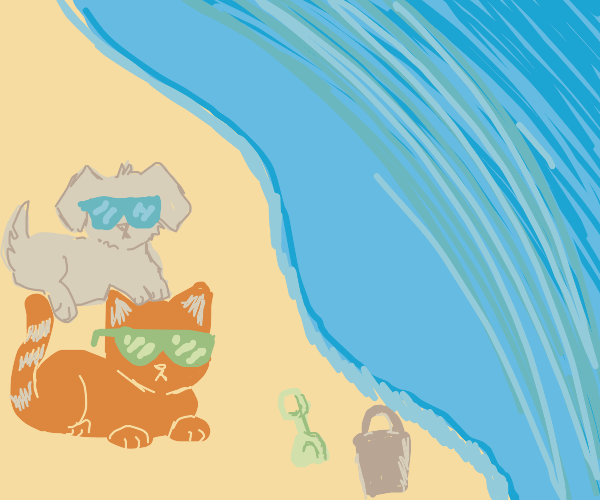 Dog & cat chilling on the beach
