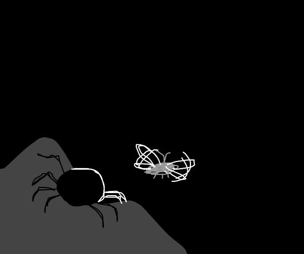 Spider stalks her prey in the dark