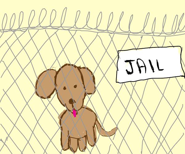 Imprisoned Dog