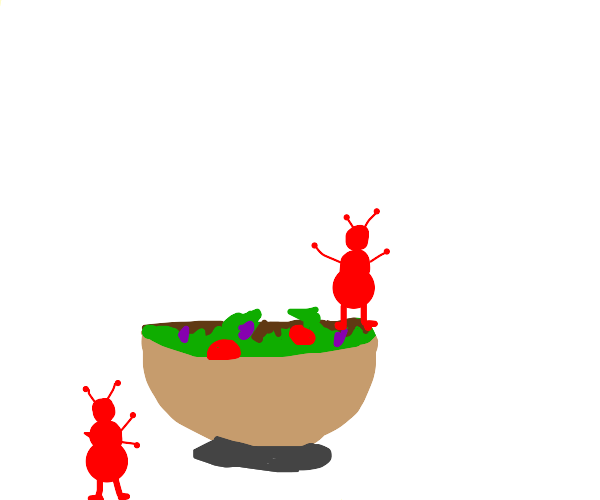 two red ants and salad