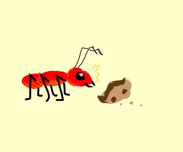 Cute ant finds cookie crumb