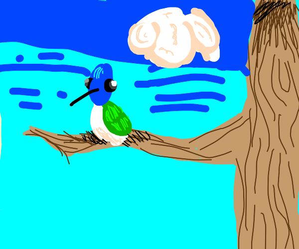 beautiful kolibri sitting on a branch