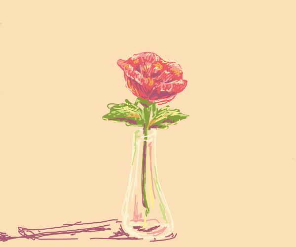 A rose in a nice vase