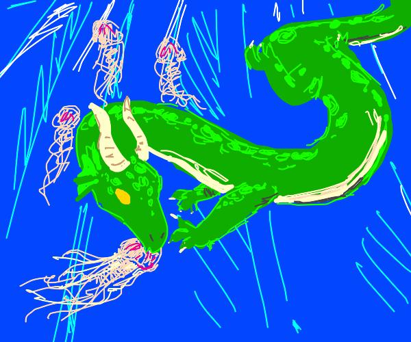 dragon eats jelly fish