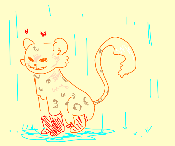 Leopard wearing booties