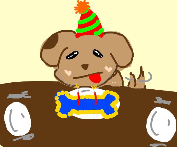 Dog celebrates it's birthday