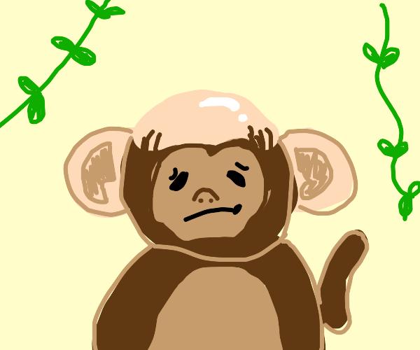 A severely balding monkey.