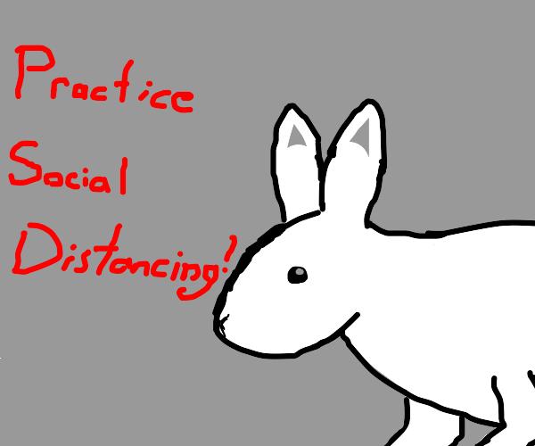 Social Distancing Bunny