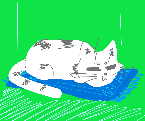 White cat on a blue carpet in a green room
