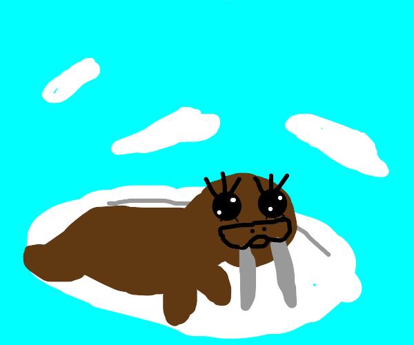 A pretty walrus
