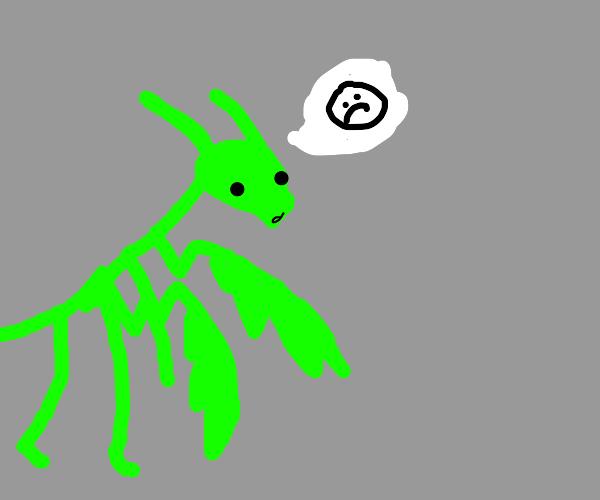 funny bugs express feelings