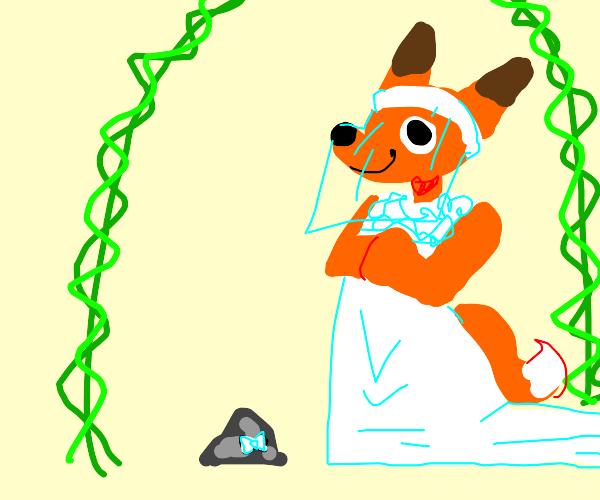 fox will marry a rock tomorrow