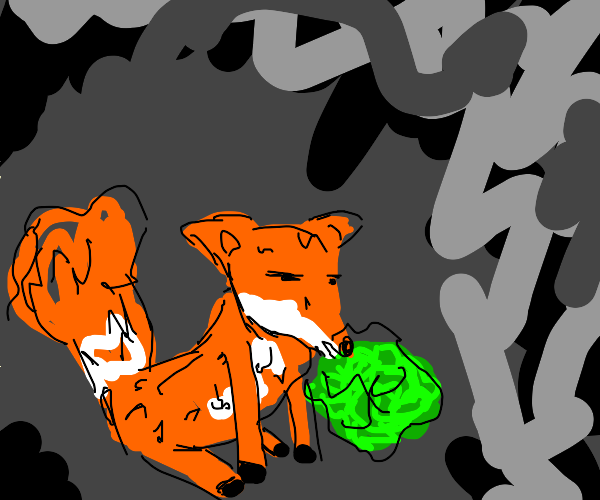 Scribbly fox nommin on green thing