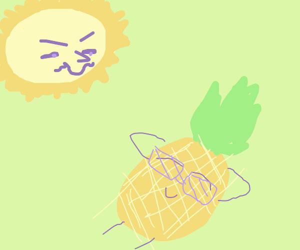 thirsty sun creeps on sun tanning pineapple