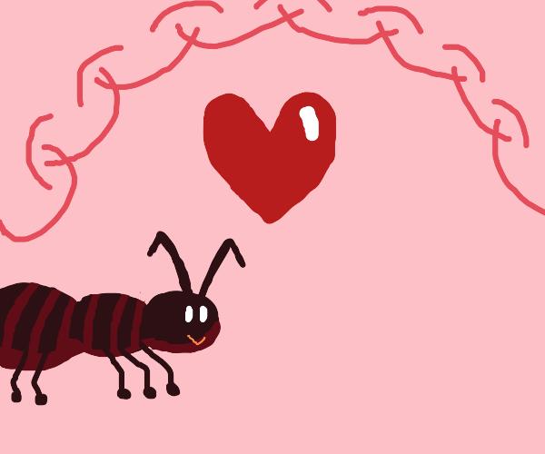 Ant in love