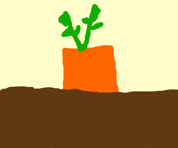a square carrot