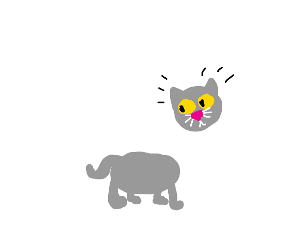 kitty with head floating above body