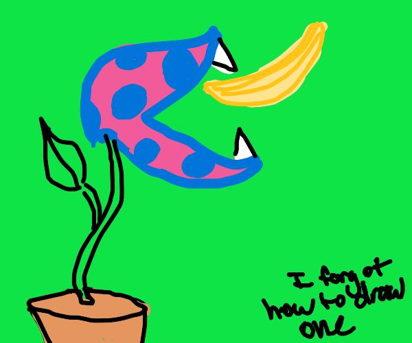 a venus flytrap stiches to a banana
