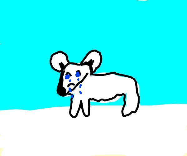 Sad Polar Bear Cub