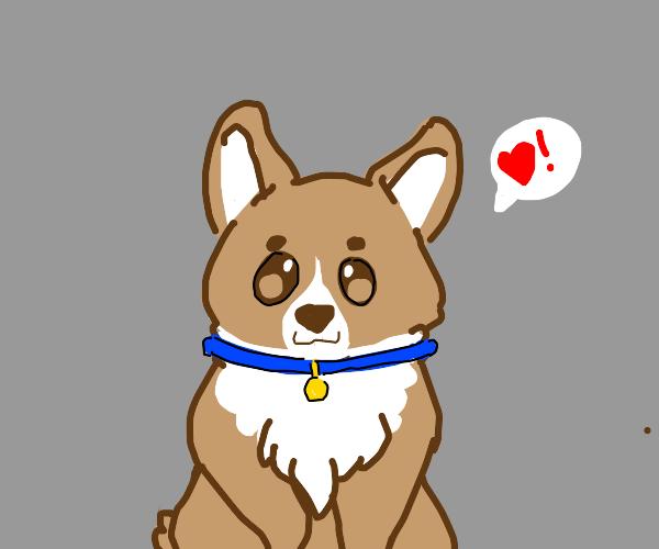 Doggo loves you