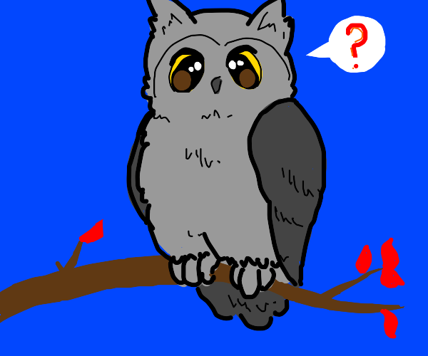 Grey owl wants to ask you a question