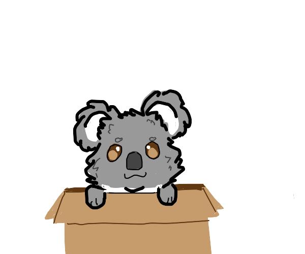 koala in a box